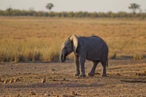Elefantens vuggevise tekst